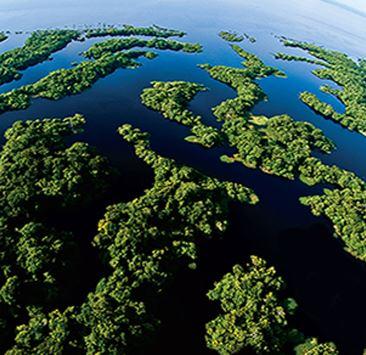 Ambientalismo.jpg